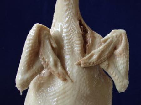 รูปไก่ต้มปลอมขนาด 2 โล รุ่นคอตรง แบบภาพถ่ายชัดๆทุกมุม